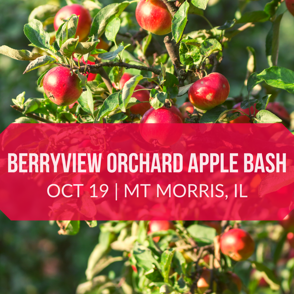 Berryview Orchard Apple Bash