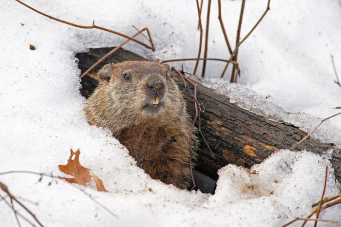 Groundhog Day Animal Tracking Program