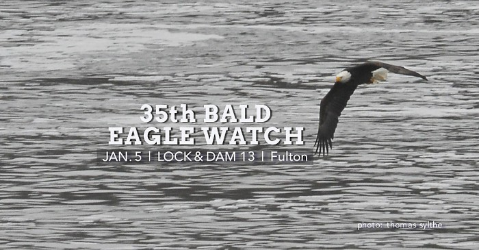 Bald Eagle Watch at Lock & Dam 13