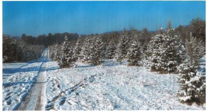 Sand Ridge Prairie Christmas Tree Farm