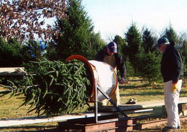 Dollinger Christmas Tree Farm