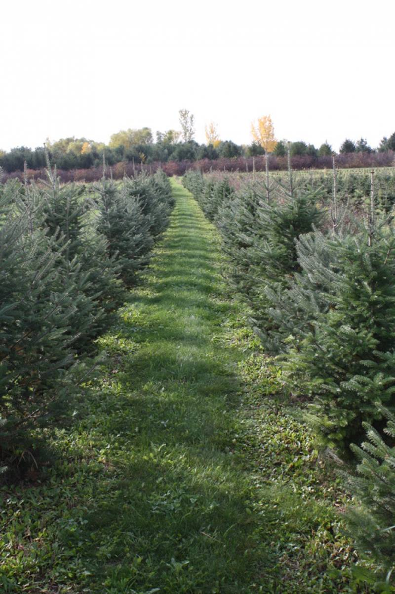 Bybee Christmas Tree Farm