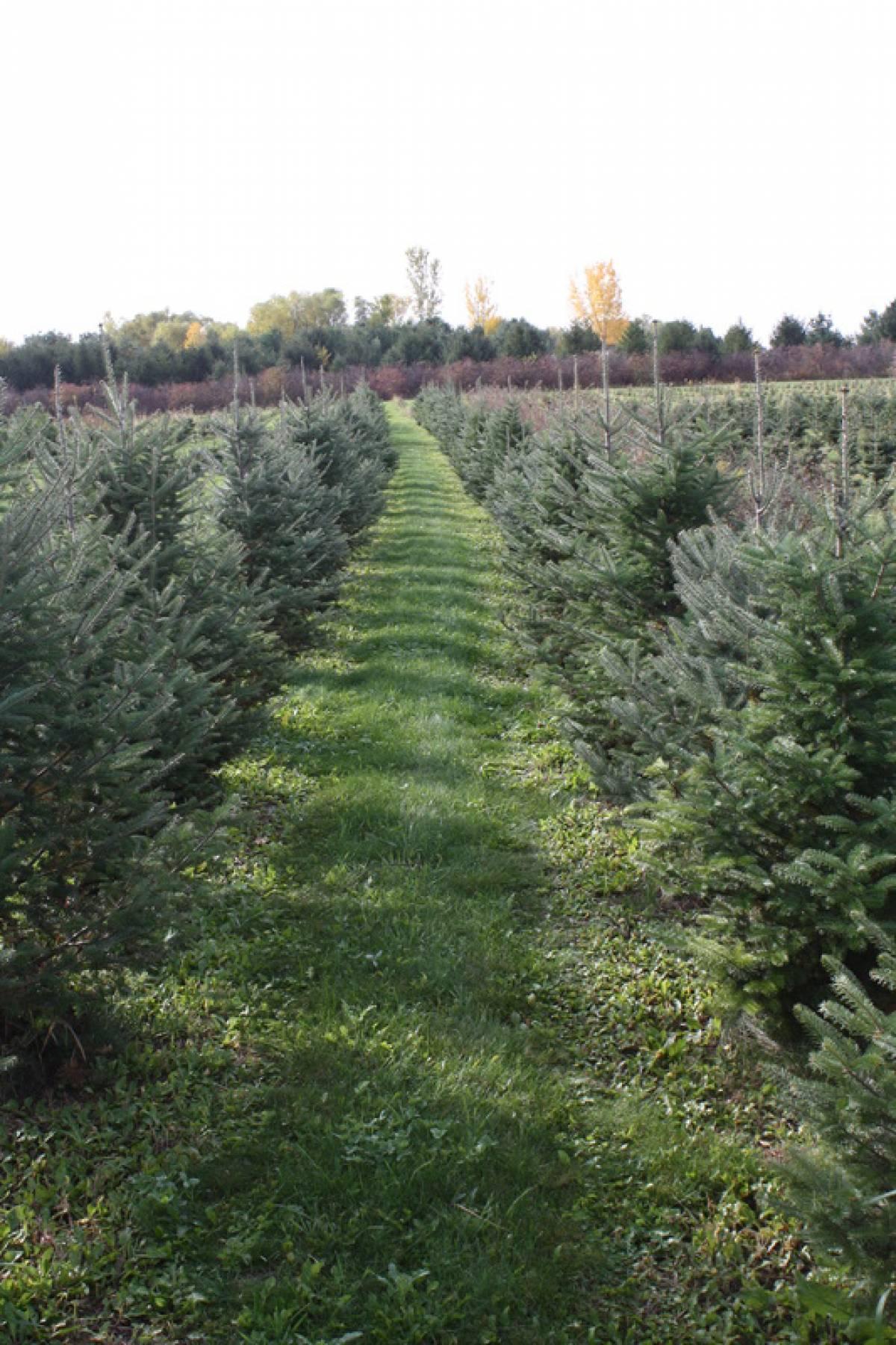 Christmas Tree Farm Photos.Bybee Christmas Tree Farm