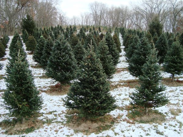 West Point Tree Farm